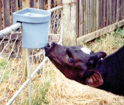 MILK BAR™ 1 - single teat, rail mounted feeder is revolutionizing calf feeding in many countries.