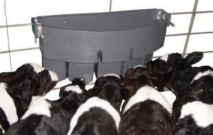 MILK BAR™ 5 Compartment - The ideal feeder for farmers feeding concentrated milk formulas to use for the first 2 weeks. Feeds five calves.